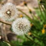 Weeds & Wild Flowers